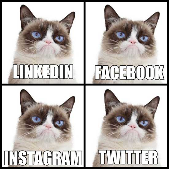 گربه اخمو در شبکه های اجتماعی