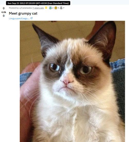 تصویر گربه اخمو