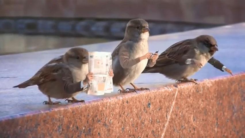 اگر پرنده ها دست داشتند
