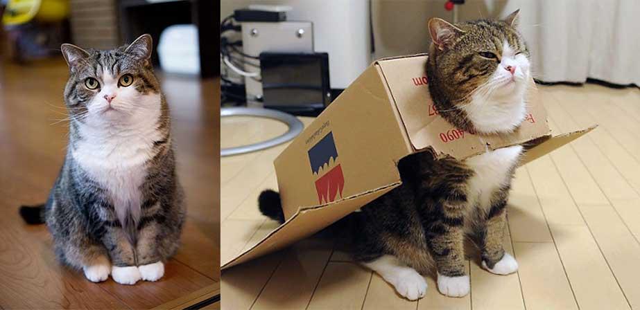 گربه ای به نام MARU