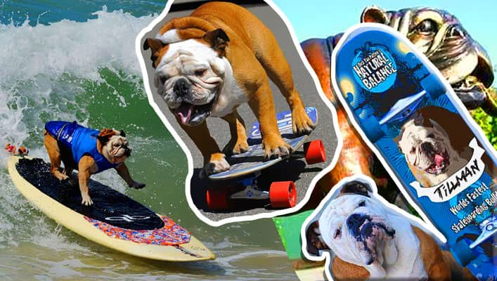 ویدئوی وایرال سریع ترین سگ اسکیت سوار