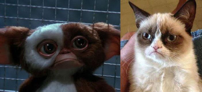 گربه اخمو و شباهت آن