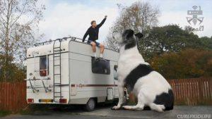 بزرگترین سگ دنیا میتواند بهترین دوست یک متخصص نرم افزار گرافیکی باشد