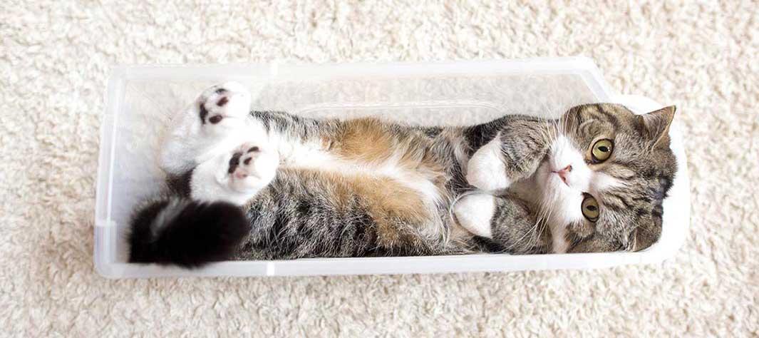 گربه ای به نام مارو